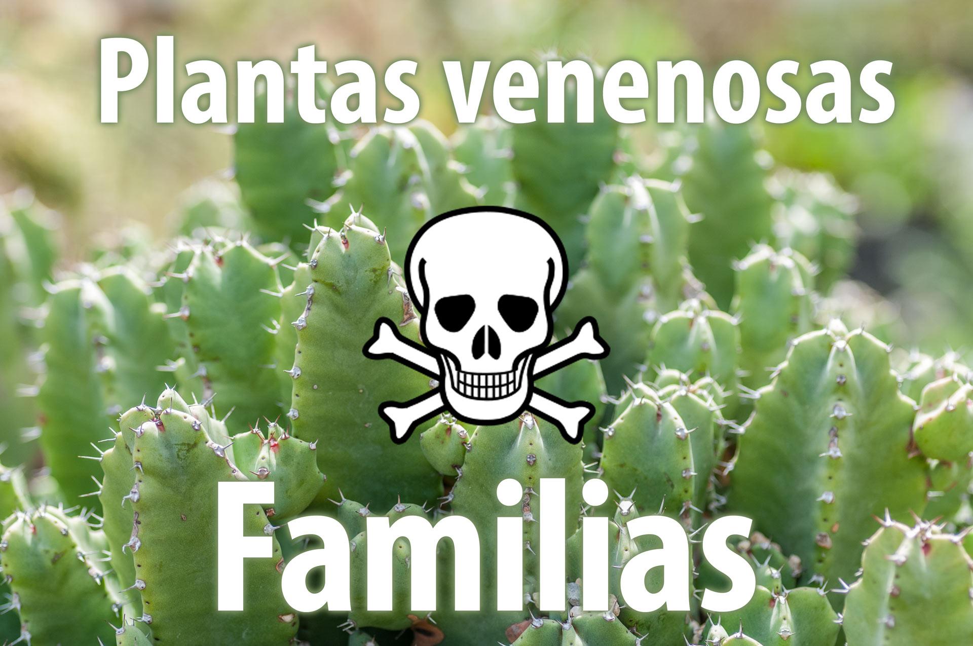 Familias de las plantas venenosas plantas venenosas Plantas de interior toxicas