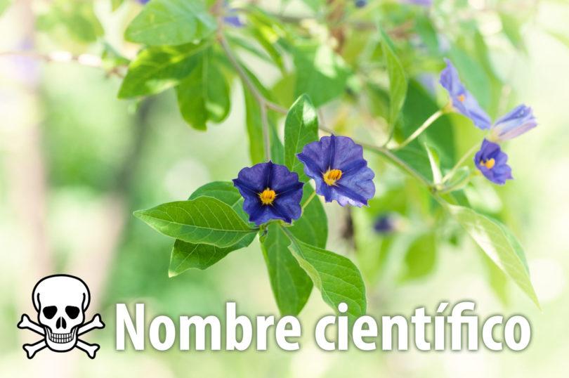 Nombres científicos de plantas venenosas