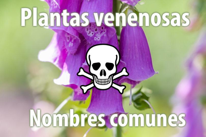 Nombres comunes de plantas venenosas